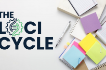 The Loci Cycle Review – Does It Really Work?